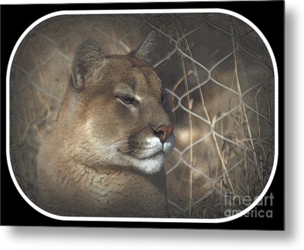 Cougar As Art 2 Metal Print