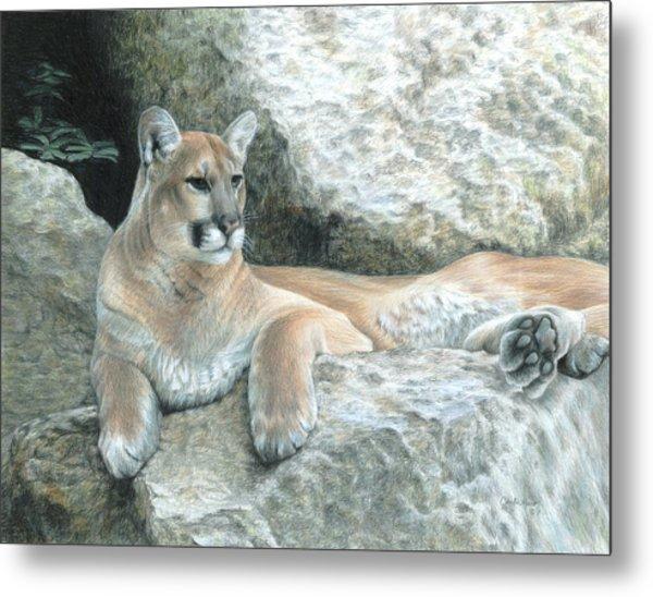 Cougar Haven Metal Print