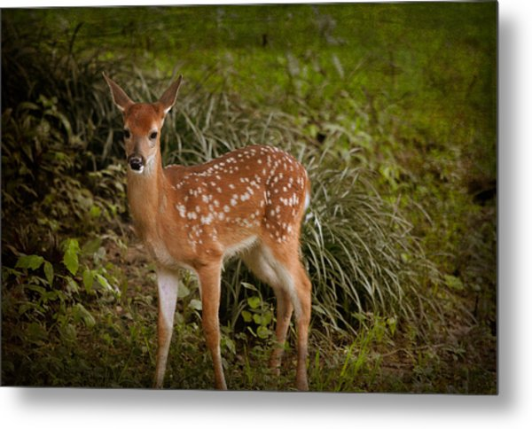 Could It Be Bambi Metal Print