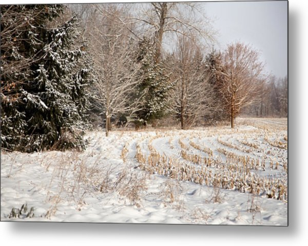 Country Contentment Metal Print