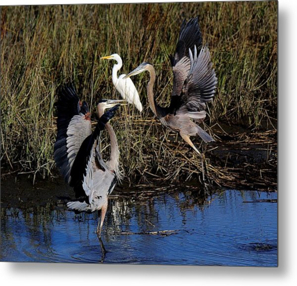 Courting Metal Print by Paulette Thomas