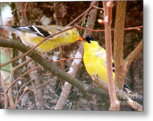 Courting Time Metal Print by Brenda Ketch
