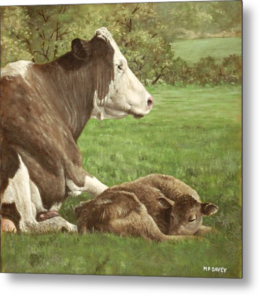 Cow And Calf In Field Metal Print