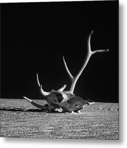 Cow Skull And Antlers Metal Print