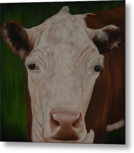 Cow Lick Metal Print