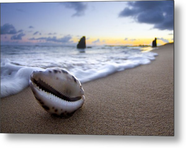 Cowrie Sunrise Metal Print