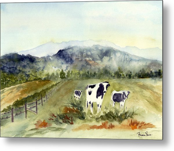 Cows In Vermont  Metal Print by Peggy Maunsell