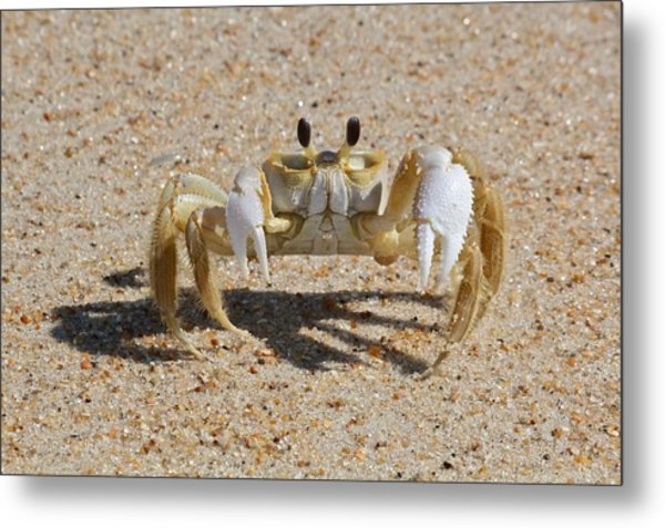 Crab On Sand Metal Print by David Wells / Eyeem