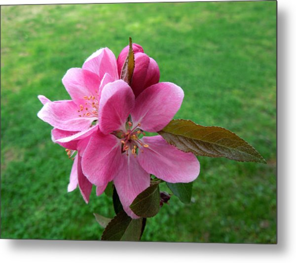 Crabapple Portrait Metal Print