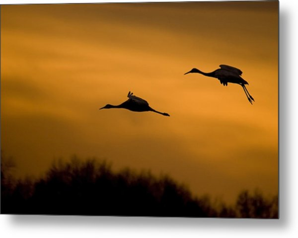 Cranes At Sunset Metal Print