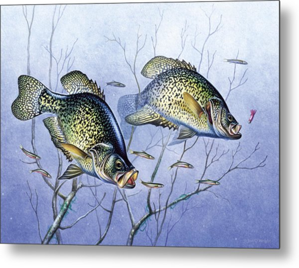 Crappie Brush Pile Metal Print