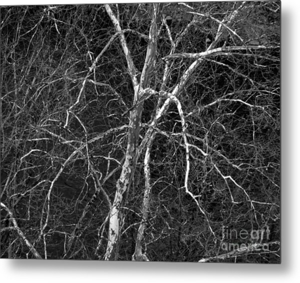Metal Print featuring the photograph Crazy Camouflage Tree by Kristen Fox