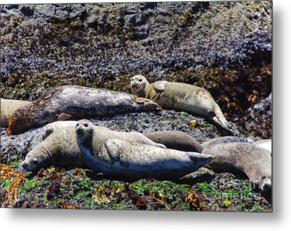 Creatures Comfortable Metal Print