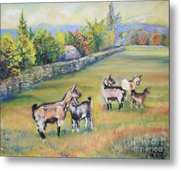 Croatian Goats Metal Print