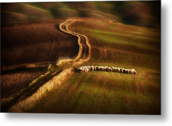 Crossing The Fields Metal Print by