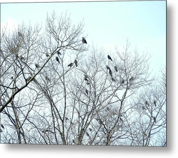 Crow Trees Metal Print