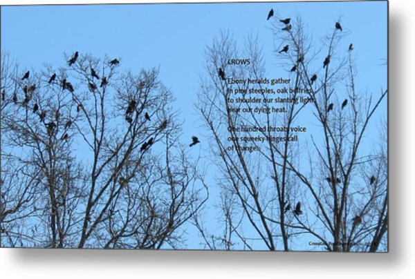 Crows Metal Print by Catherine Favole-Gruber