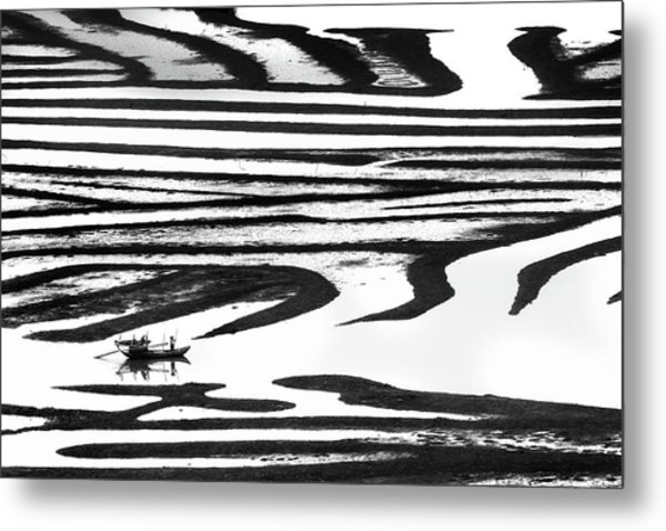 Cruising On A Zebra Metal Print