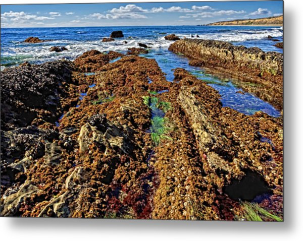 Crystal Cove Tide Pools  Metal Print by Donna Pagakis