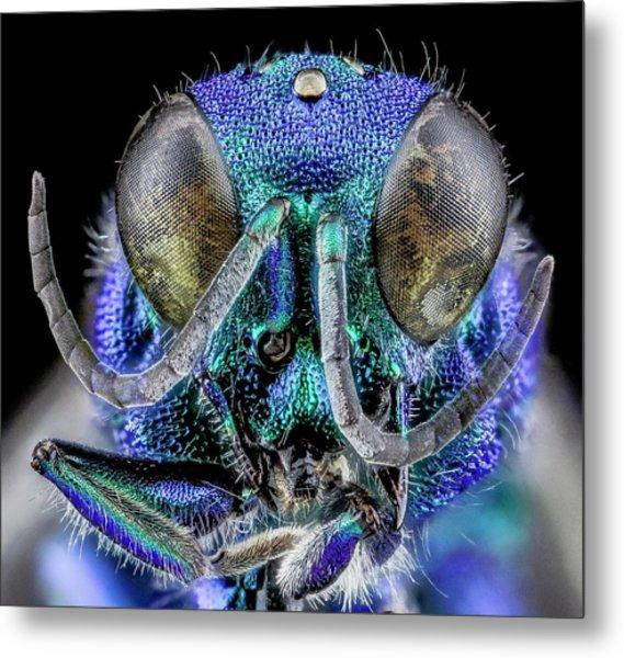 Cuckoo Wasp Metal Print