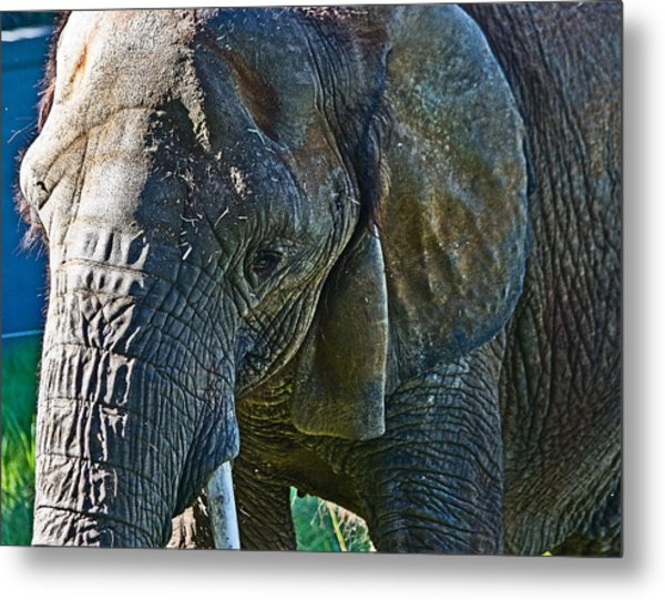 Cuddles In Search Metal Print