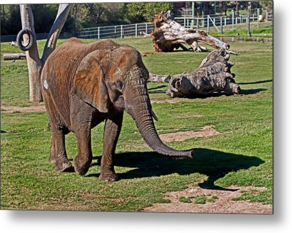 Cuddles Searching For Snacks Metal Print