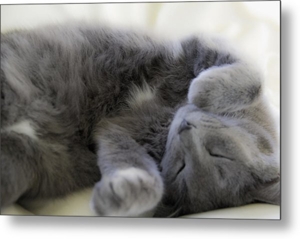 Cuddley Cat Metal Print