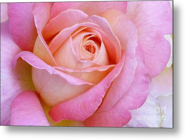 Cupid's Choice Rose Metal Print
