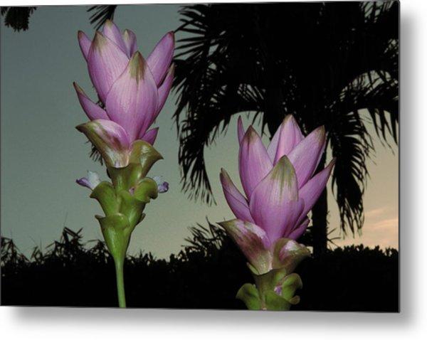 Curcuma Hybrid Flowers Metal Print