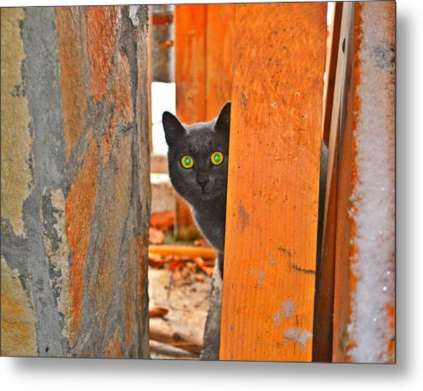 Cat Curiosity Metal Print