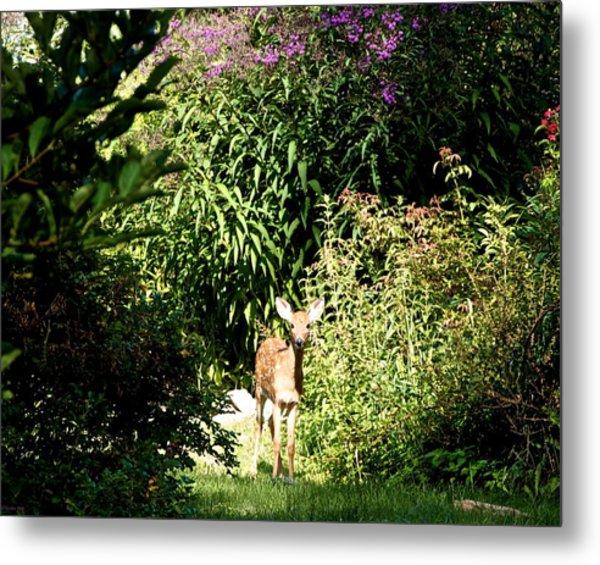 Curious Youngster Metal Print