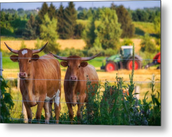Metal Print featuring the photograph Curiousity by Garvin Hunter