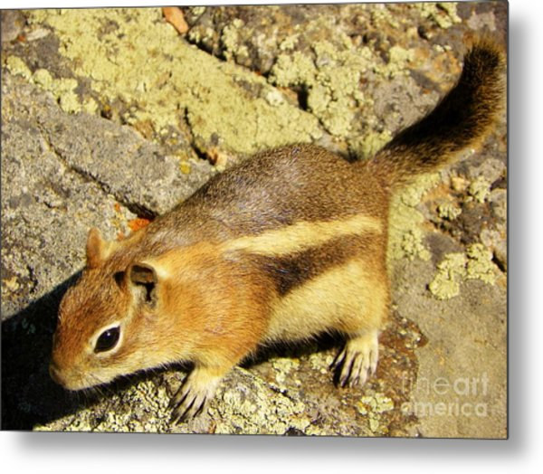 Curiousity Metal Print by Michelle Bentham