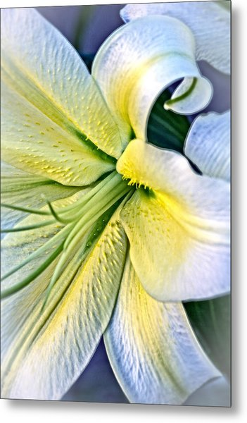 Curl Of A Lily Metal Print