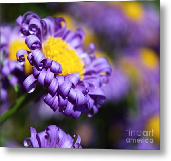 Curly Haired Beauty Metal Print