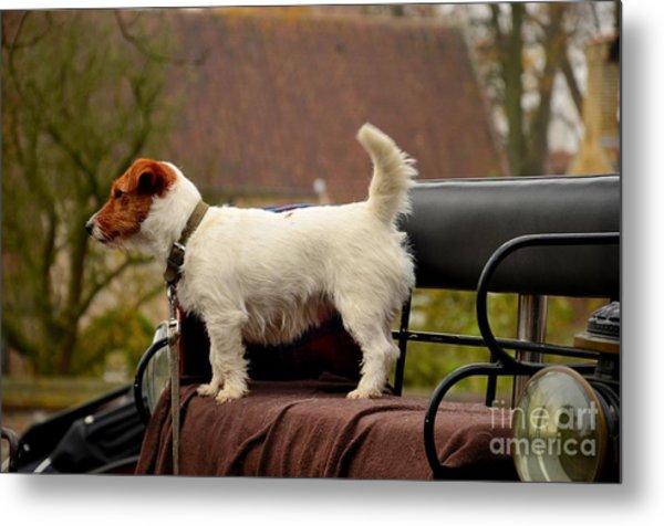 Cute Dog On Carriage Seat Bruges Belgium Metal Print