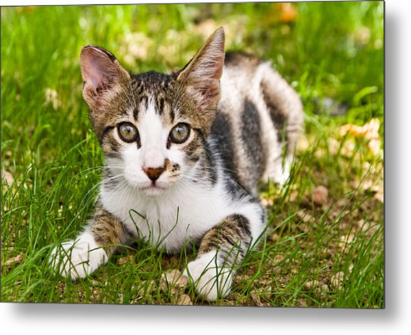 Cute Kitty In The Grass Metal Print by Cristina-Velina Ion