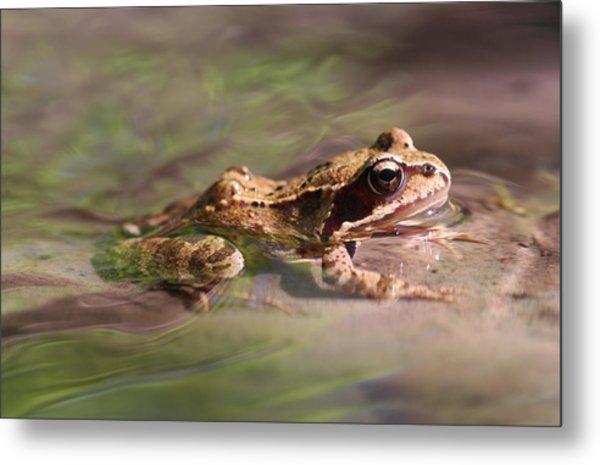 Cute Litte Creek Frog Metal Print