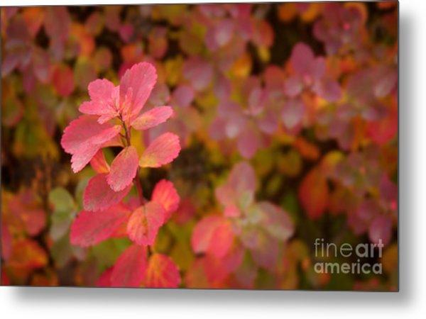Cute Pink Plant Metal Print by Jolanta Meskauskiene