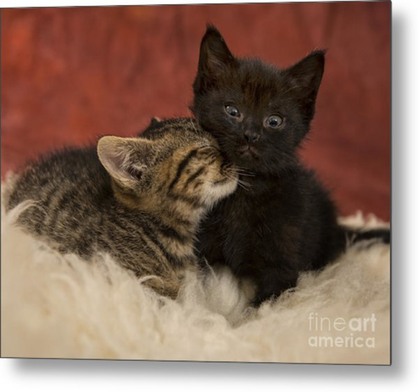 Cuties Metal Print