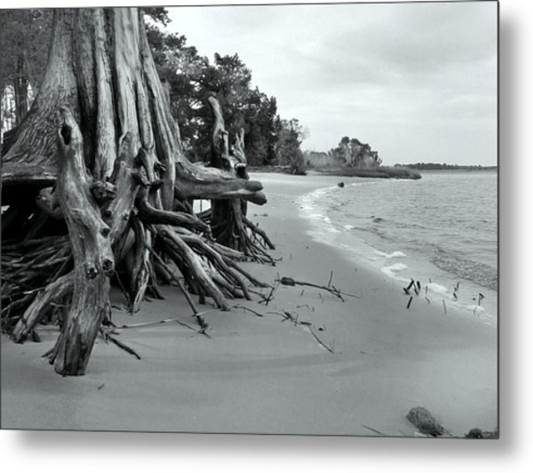 Cypress Bay Metal Print