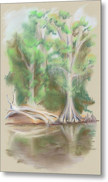 Cypress By The Waccamaw River Metal Print by MM Anderson