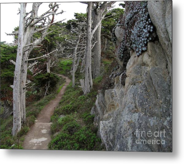 Cypress Grove Trail Metal Print