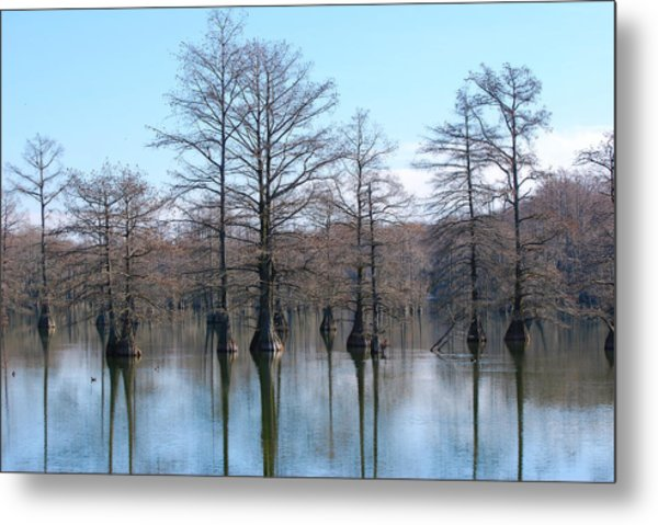 Cypress Reflections Metal Print