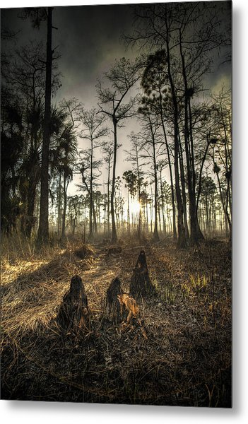 Cypress Stumps And Sunset Fire Metal Print