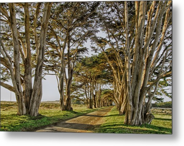 Cypress Tunnel Metal Print by Robert Rus