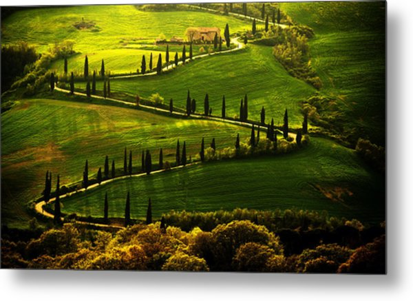 Cypresses Alley Metal Print