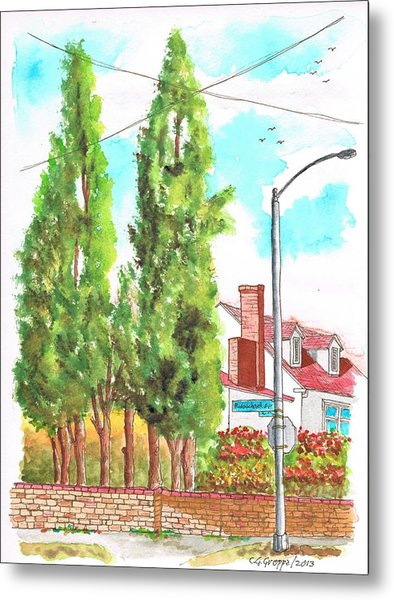 Cypresses In Massachusett Ave - Westwood - California Metal Print by Carlos G Groppa