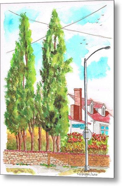 Cypresses In Massachusett Ave - Westwood - California Metal Print