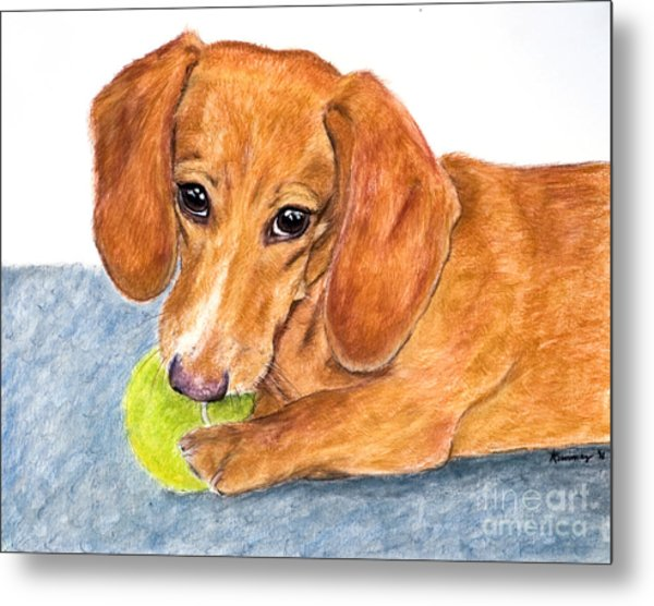 Dachshund With Tennis Ball Metal Print